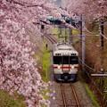 御殿場線普通列車。。313系 山北の桜と一緒に。。20160402