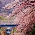 山北の桜を見ながら。。小田急60000系あさぎり号 20160402