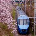 山北の桜と特急あさぎり号。。20160402