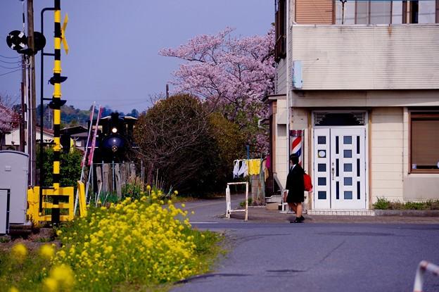 春の朝の通学路風景。。小湊鉄道上総牛久駅  20160409