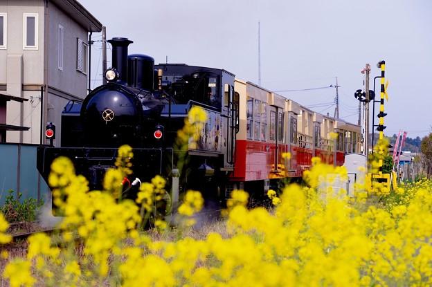 菜の花と小湊鉄道トロッコ列車。。出発  20160409