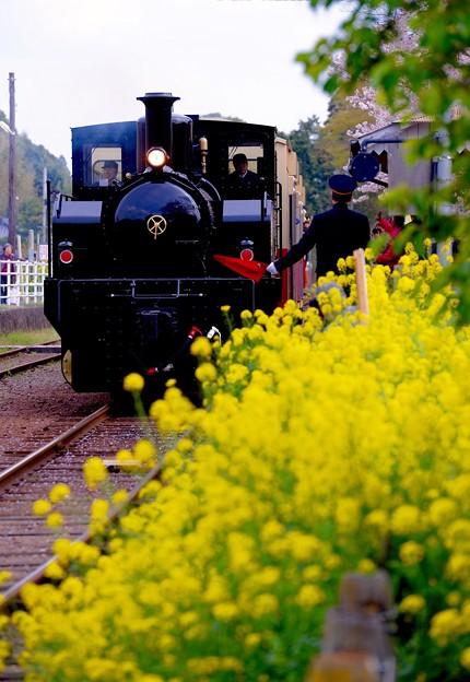 春の小湊鉄道。。トロッコ列車の旅 里見駅菜の花と。。20160409