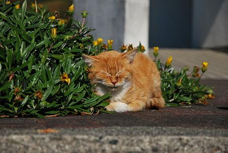 童謡の園・猫1
