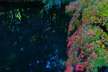 20141018_132747_Canon EOS M 雲場池