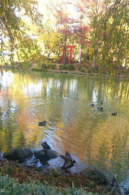 初秋の公園にて