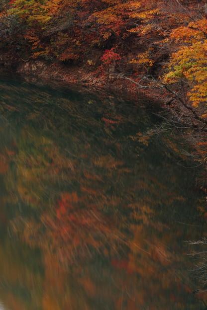 落ち葉の軌跡