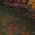 Photos: 落ち葉の軌跡