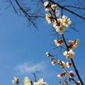 写真: 咲きかけ