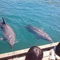 Photos: ドルフィンファームしまなみ イルカ 見る