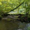 Photos: 数分前の奥入瀬渓流です