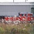 Photos: 芒とDD51-888