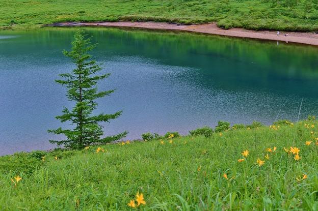 野反湖 ノゾリキスゲの咲くころ(12)
