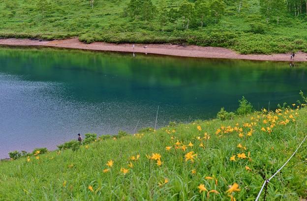 野反湖 ノゾリキスゲの咲くころ(13)