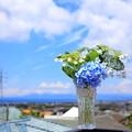 Photos: さわやか紫陽花