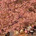 ひさかたの 光のどけき春の日に・・・