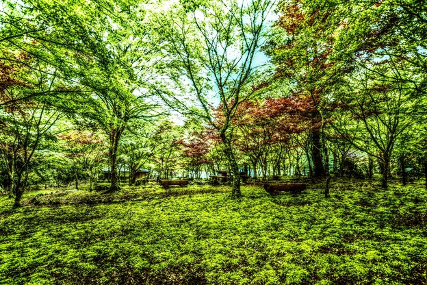 Photos: Green Forest ~苔むす林~