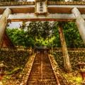Photos: Green Forest ~大平神社~