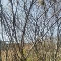 写真: 【1月4日は鷲宮神社へ!その3】こっちは左