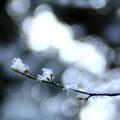 写真: 春待つもの