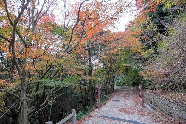 二本松林道