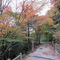 Photos: 二本松林道