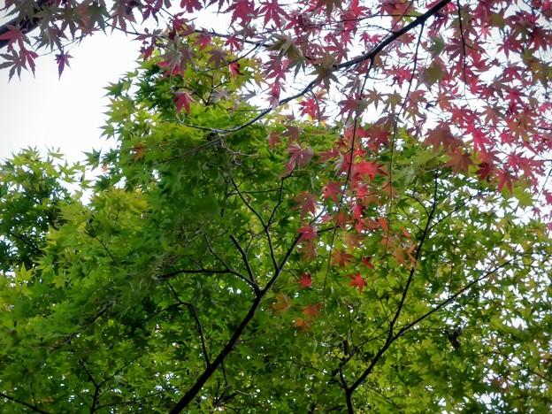 Photos: 青葉と紅葉