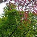 青葉と紅葉