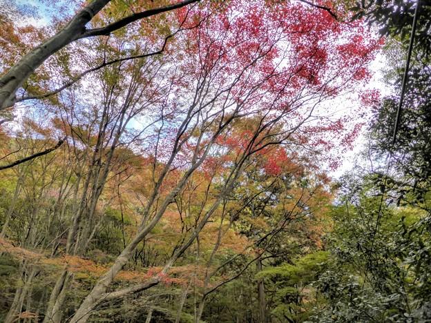 Photos: 大師道のもみじ