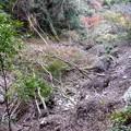 Photos: 一休亭の北側で崩落