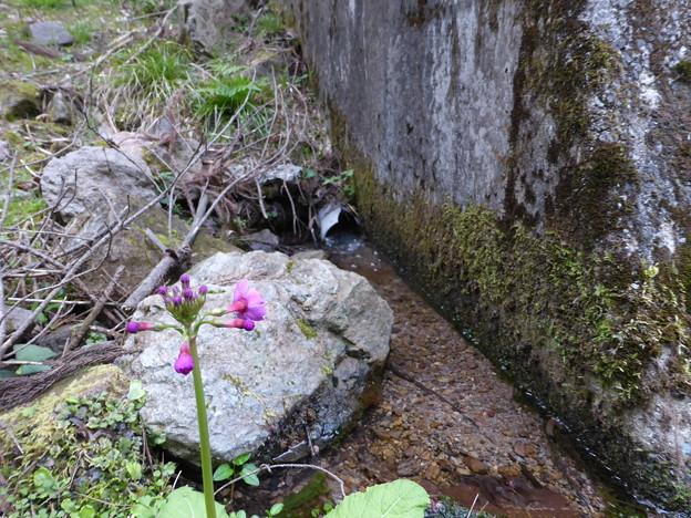 松か井の水は谷川に流れる