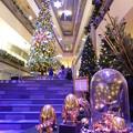 高さ8mのクリスマスツリー