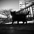 写真: 黒猫子橋