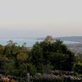 Photos: 薔薇と富山湾