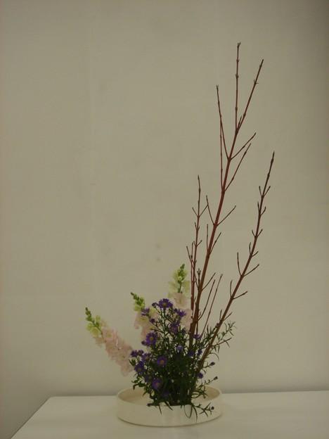 サンゴ樹、金魚草、クジャク草