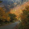 日陰秋、陽当たる秋