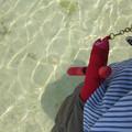Photos: ヤマネさん、海を渡る。