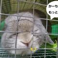 Photos: にんじん2