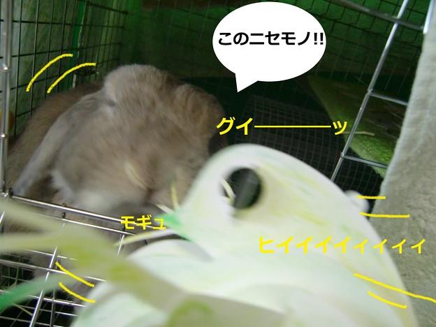 Photos: ミジンコ4