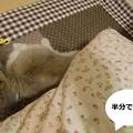 Photos: すきまっち2
