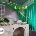 Photos: ぺろ6