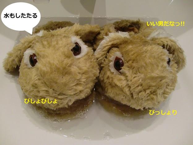 Photos: すりっぱ2