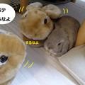Photos: すりっぱ5