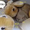 Photos: すりっぱ6