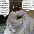 Photos: ニセ先生2