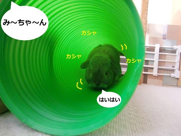 Photos: 遊ぼう1