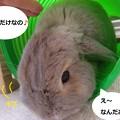Photos: 遊ぼう3