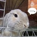 Photos: ぽかぽか3