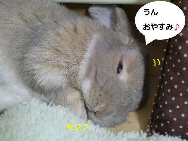 Photos: おやすみ3
