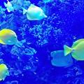 八景島 熱帯魚