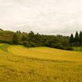 写真: 収穫のとき・・・♪
